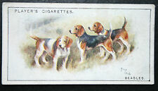 Beagle  Hounds  Hunting Pack     Vintage Colour Card ## VGC