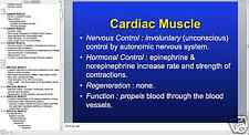 216 page MUSCLE TISSUE PowerPoint Presentation on CD