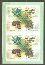 Russia: sheet of mint stamps, 2013 cones of coniferous/shubs, Mi#1914-1917 MNH