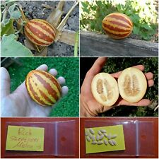 Melon ''Rich Sweetness'' ~15 Top Quality Seeds - EXTRA RARE - Super Sweet!