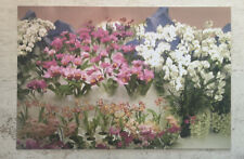 Postcard ~ Flowers orchid Rows pink & white