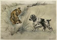 AMERICAN COCKER SPANIEL DOG LIMITED EDITION PRINT ENGRAVING - Henry Wilkinson #1