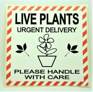 LIVE PLANTS URGENT Labels  Stickers LARGE 100x100mm Garden Flowers PPI-LIV-PL