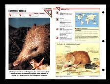 Common Tenrec Wildlife Fact File Mammal Animal Card Home School Study 1.248