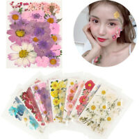 Real Dried Flower Manicure Tips Nail Art Decorations Face Sticker Decor