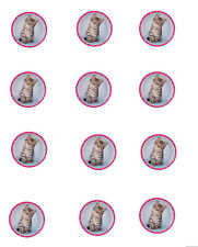 Kitten Party Cats Edible Image Cupcake Toppers (12 per sheet)