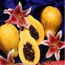 30 stücke Frische Zwerg Papaya Fruchtsamen Sehr Süße Bio Obstgarten Bonsai H5X3