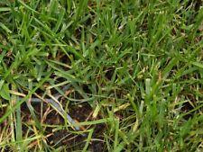 Vorteils-Pakete Rasengitter, Rasenplatten, Rasenwaben Rasensteine aus Kunststoff