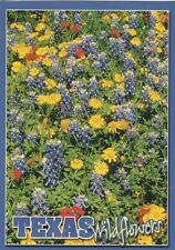 "*Postcard-""TEXAS""-Wildflowers Blanket Fields & Road Sides in Springtime"""