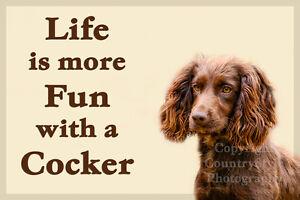 Chocolate Brown Cocker Spaniel Dog Fridge Magnet Birthday Gift New