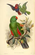 John Gould Native Birds prints exotic painting parrots Vintage Old Australia