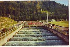 salmon swim upstream Bonneville Dam Fish Ladders Columbia River Williams photo