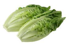 3000 LITTLE GEM LETTUCE Small ROMAINE Butterhead Lactuca Sativa Vegetable Seeds