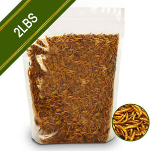 Non-GMO Dried Mealworms Fit for Birds Chickens Hamster Fish Reptile Turtles 2lbs