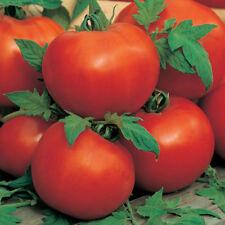 Tomato Alisa Craig 500 seeds ORGANIC / NON GMO