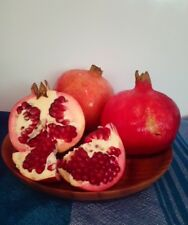 Pomegranate tree,  Best fruit out of all fruits