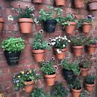Pot-Ups Plant Hangers,holders,rings Hang flower pots on walls,fences,pallets