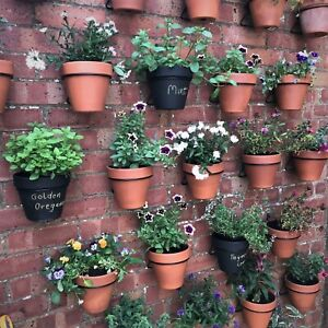 """6 Plant hangers holders for 6""""(15cm) pots,hang bedding plants.wall.fence,shed"""