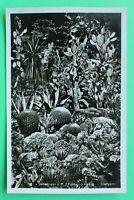 W 3) AK Überlingen 1940 Kakteenpflanzung im Stadtgarten