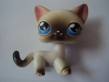 maxibox-2015 - Chat Européen Cat European # 05 LITTLEST PET SHOP Petshop