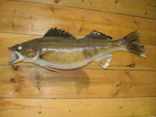 Real Skin Mount Walleye Pike Northern Fish Taxidermy Bass Crappie W3