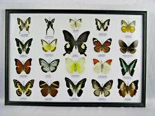 20 echte exotische Schmetterlinge - Wandbild - Geschenkidee - Schaukasten - o_14