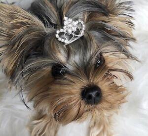 Triple Heart Pet Tiara Crown reduced £5.99 now £3.99