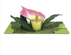 Lovepop 3D Pop Up Cards Set Of 2 Pink Calla Lily Cards