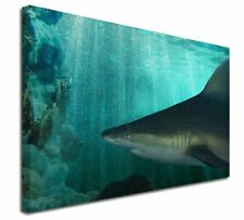 More details for shark photo x-large 30