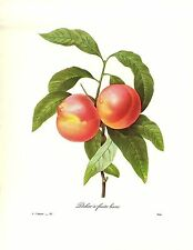 1991 Vintage REDOUTE FLOWER #95 PEACHES FRUITS LISSES Color Art Print Lithograph