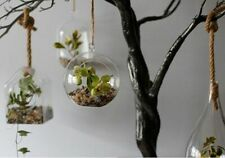 Hanging Glass Terrarium, Planter -  Home Decor, Gift