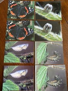 Butterfly Life Cycle Cards - Pairing