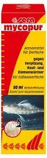 sera mycopur - Arzneimittel für Zierfische gegen Verpilzungen (1 x 50 ml)