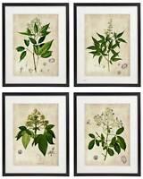 Vintage Botanical Floral No. 04 Art Home Wall Art Print Set of 4 Prints UNFRAMED