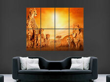 African Cats WILD AFRICA TRAMONTO LION GRANDI FOTO POSTER GIGANTE ENORME