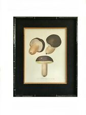 Antique drawing mushroom print / faux bamboo framed lithograph / botanical food