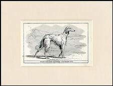 AFGHAN HOUND RARE ANTIQUE 1900 WOOD BLOCK ENGRAVING DOG PRINT READY MOUNTED
