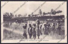 MONDINE 285 MONDARISO RISO RISAIA AGRICOLTURA - VERCELLI Cartolina viagg. 1925