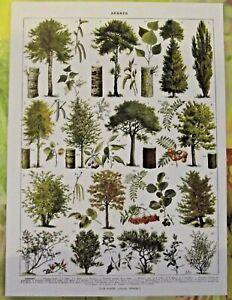 Art Print affiche poster Antique Book Page Peuplier Noisetier Eglantier Sorbie