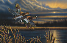 Richard Clifton WIDGEON-OUT FRONT art print Ducks NICE