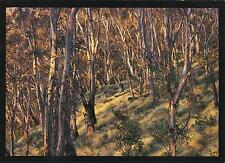 SNOW GUMS at POINT LOOKOUT in the NEW ENGLAND NATIONAL PARK POSTCARD - NSW PC