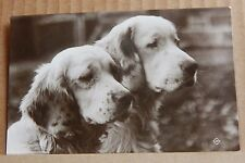 Postcard  Animals Dogs Retrievers Real photo unposted Valentines And Co