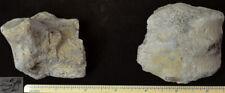 Titanothere Metatarsal Fossil, Mid Foot Bone, Brontothere, South Dakota, T526