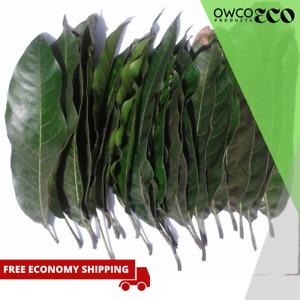 Dried Large Mango Leaves 50 Natural 100% Pure Organic Leaf Medicine Tea Ceylon