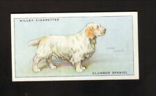 Clumber Spaniel--1937 Will's British Cigarette Card