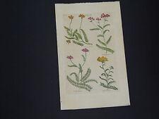 Sir John Hill, Botanical, The Vegetable System 1761-1775 Yarrow #20