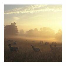 Dawn Chorus Sound Card - plays beautiful birdsong when opened!