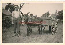 Foto, Blick auf ein einen stolzen Esel bei der Arbeit (N)1890