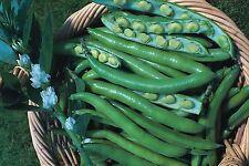 Vegetale Broad Bean Aquadulce Claudia 145 GM circa 88 ~ 98 Semi
