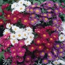 100 Seeds Aster Alpinus Mix FLOWER SEEDS